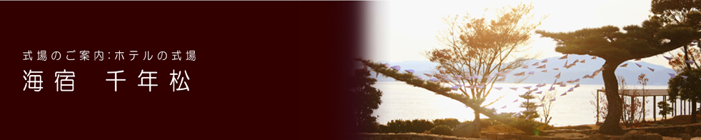 海宿 千年松イメージ